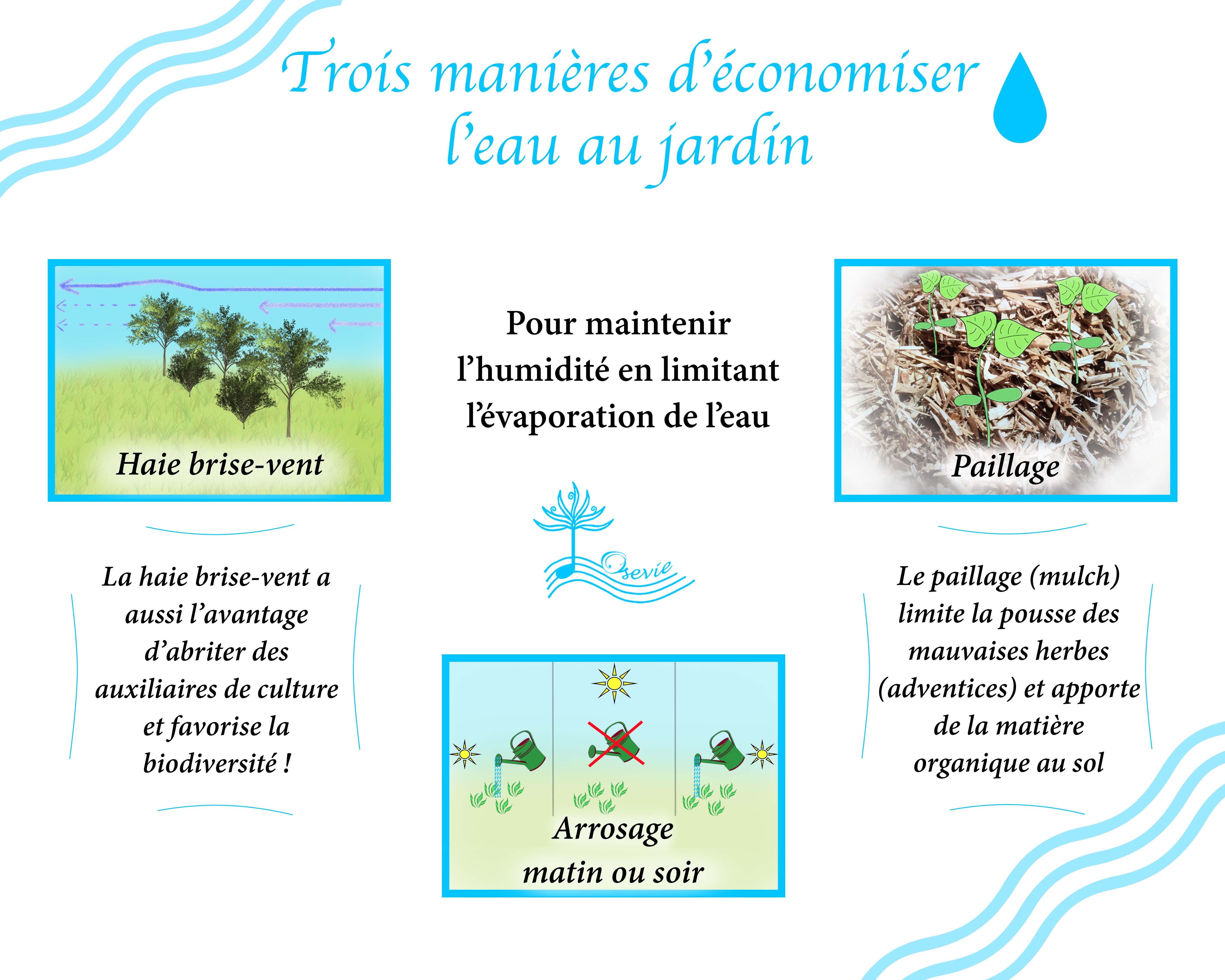 Trois manières d'économiser l'eau au jardin_Osevie.jpg